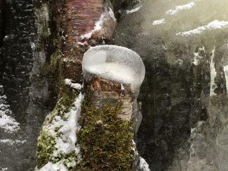 Stubbe ned is på