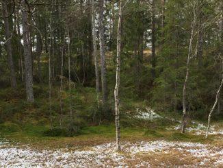 Myr med sne