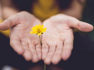 En blomst mellom hender